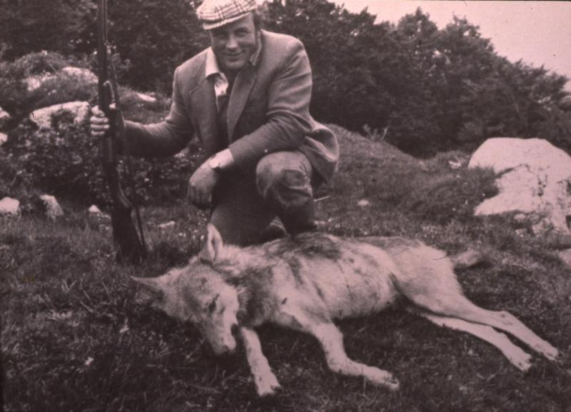 Chasseur (caçaire) posant devant un loup (lop) mort, aux Salces ...